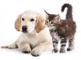 Pet Care - Animali da Affezzione